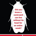 Online Strategies for Pest Control Advertising