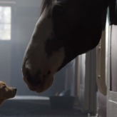 Puppy Love is YouTube's Ad Blitz 2014 Winner